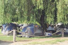 Campsites on green grass.